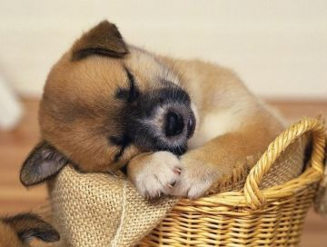 Image result for sleeping puppyy